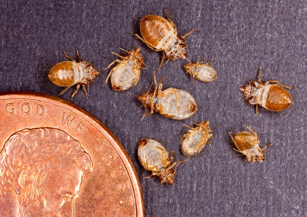 How Much Does Bed Bug Extermination Cost? | Angi