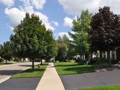trees and driveway