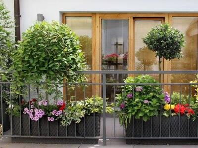 Colorful floral balcony garden