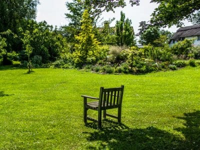 backyard lawn with garden and wooden chair in middle of lawn