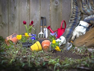Gardener working in flower bed at base of a privacy fence with spade, cultivator and flowerpots.
