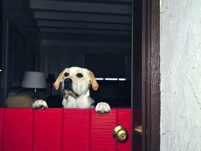 red Dutch door with dog