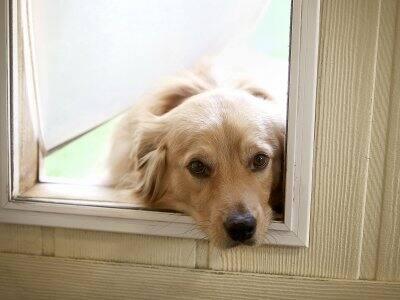 dog looking through pet door
