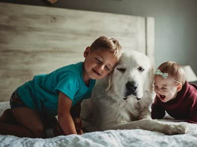 Little boy, toddler play with dog on bed