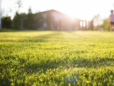 Lawn on a sunny day with children playing in the background