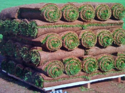 Rolls of sod stacked on a platform