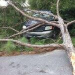 Fallen tree on car