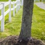 tree next to white fence