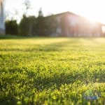 Lawn on a sunny day with children playing in the background (Photo by Natalia - stock.adobe.com)