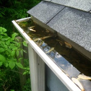 clogged rain gutter (Photo by Photo courtesy of Eric Schmuttenmaer  )