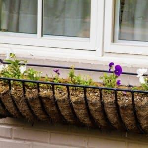 Pansies in flower box under old house window.