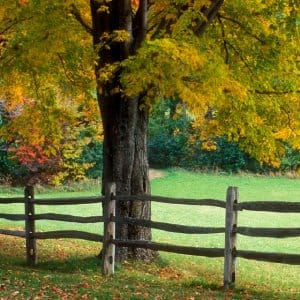 Simple landscaping mistakes can harm your tree's health. (Photo courtesy of Juan Alberto Garcia Rivera)