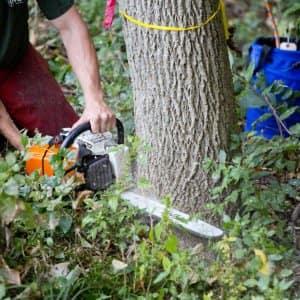 A man using a chainsaw to cut down a tree