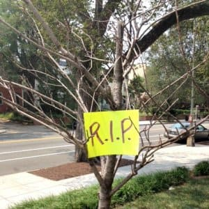 Dead tree waiting for removal in D.C. (Photo by Jason Hargraves)
