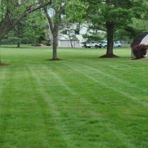 fertilized lawn