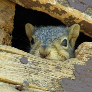 squirrel in house (Photo by Angie's List)