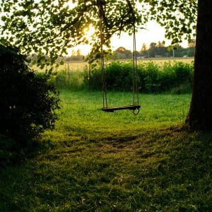 rope tree swing