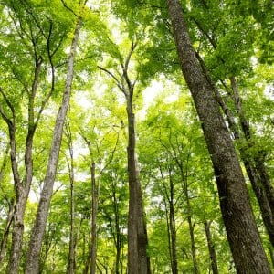 tree disease and fungus (Photo by Eldon Lindsay)