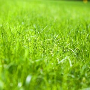 Proper lawn care can lead to a lush, beautiful lawn. (Photo courtesy of Melissa Caughey/Tilly's Nest)
