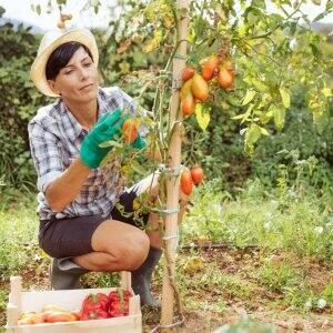 A woman checking vegetables in a backyard garden