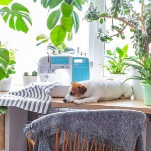 Dog with plants (Photo by Natalia Duryagina / iStock via Getty Images)
