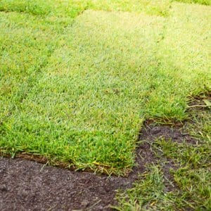Fresh sod installation in yard