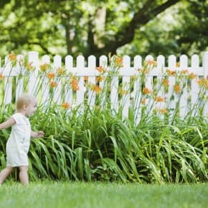 Toddler girl walking in front of orange flowers and white fence (Photo by Blend Images/John Fedele via Getty Images)