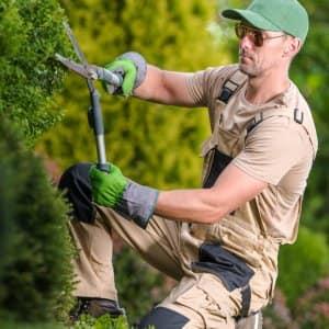 A professional giving a bush shape in a garden (Photo by Tomasz Zajda / EyeEm/EyeEm via Getty Images)