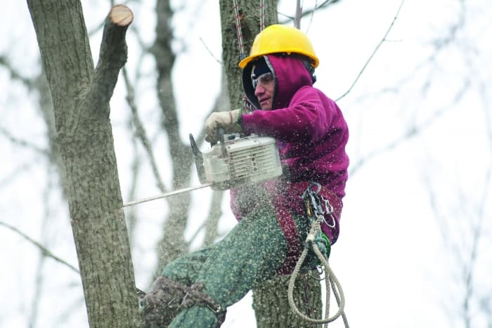 tree trimming with chainsaw
