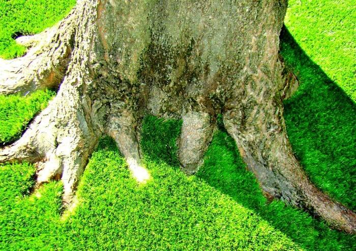 artificial turf around tree