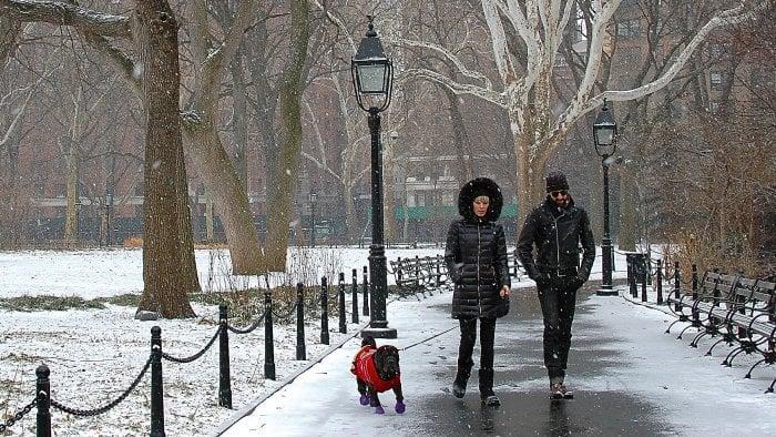dog in blizzard