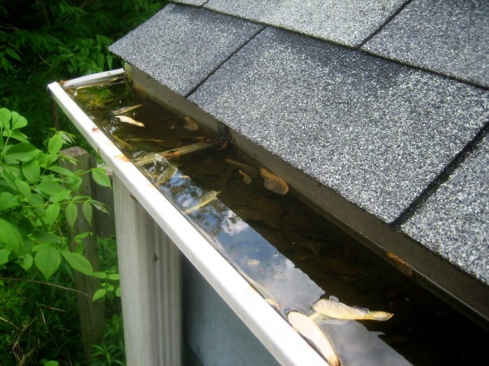 clogged gutter downspout