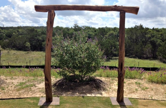 Outdoor shrub framed by timber