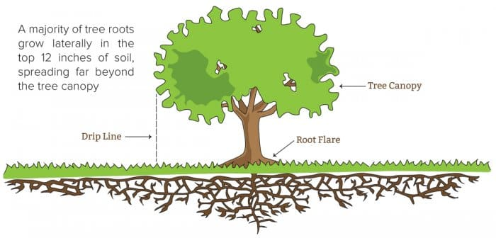 graphic showing tree roots growing underground