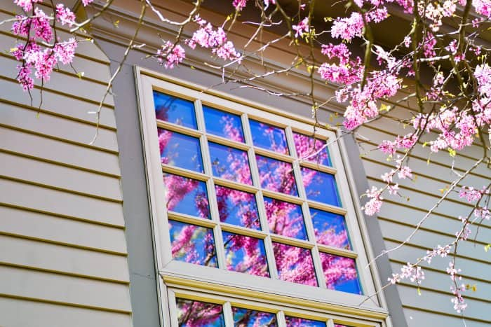 windows with flowers