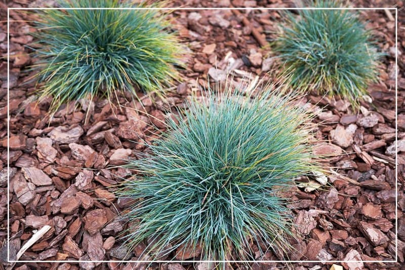 ornamental grass clumps in rock garden (Photo by seven75 / iStock / Getty Images Plus via Getty Images)