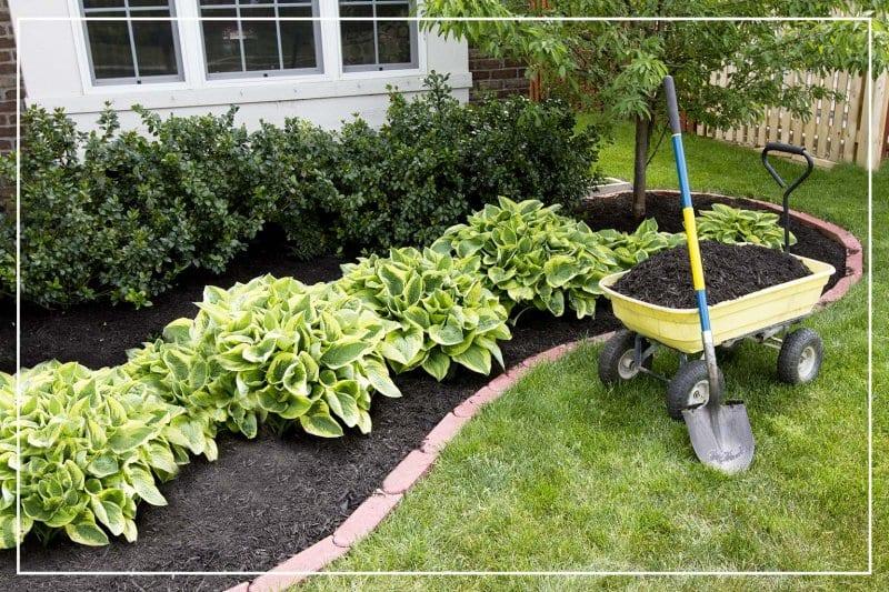backyard garden with fresh mulch (Photo by Ozgur Coskun / Shutterstock.com)