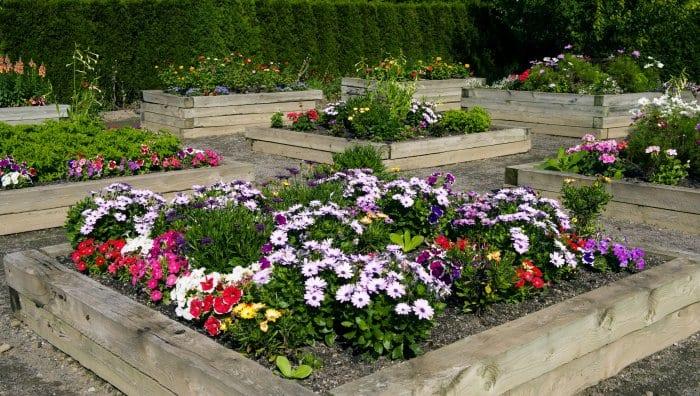 Raised flower beds provide an instant border. (Photo courtesy of Karen Massier)