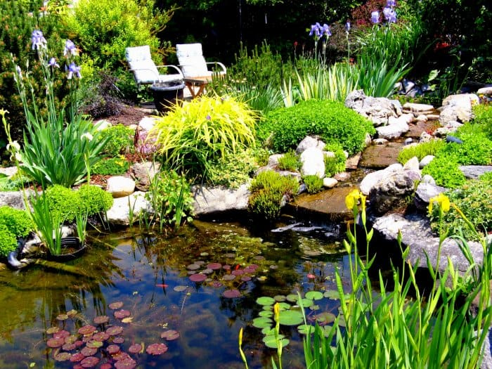 Add visual depth to your pond with vertical, horizontal and underwater plants. (Photo courtesy of Andrea_44 via Flickr.com)
