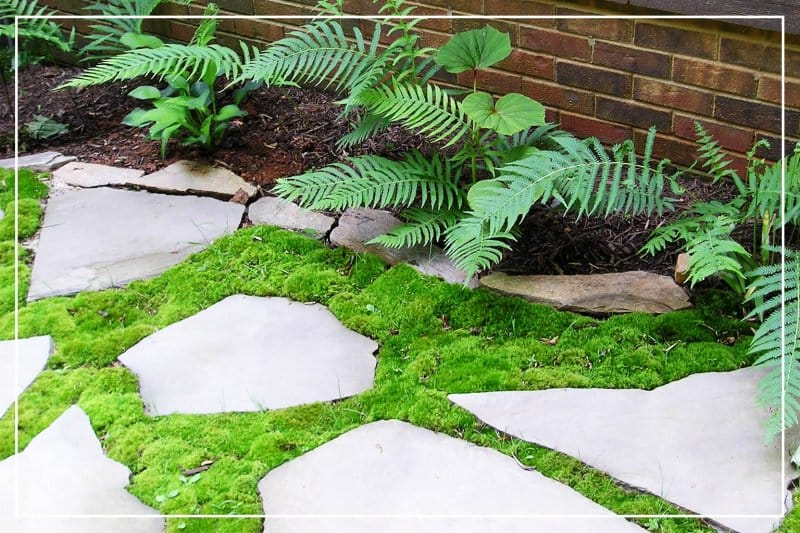 mossy garden path (Photo by etcgirl / iStock / Getty Images Plus via Getty Images)