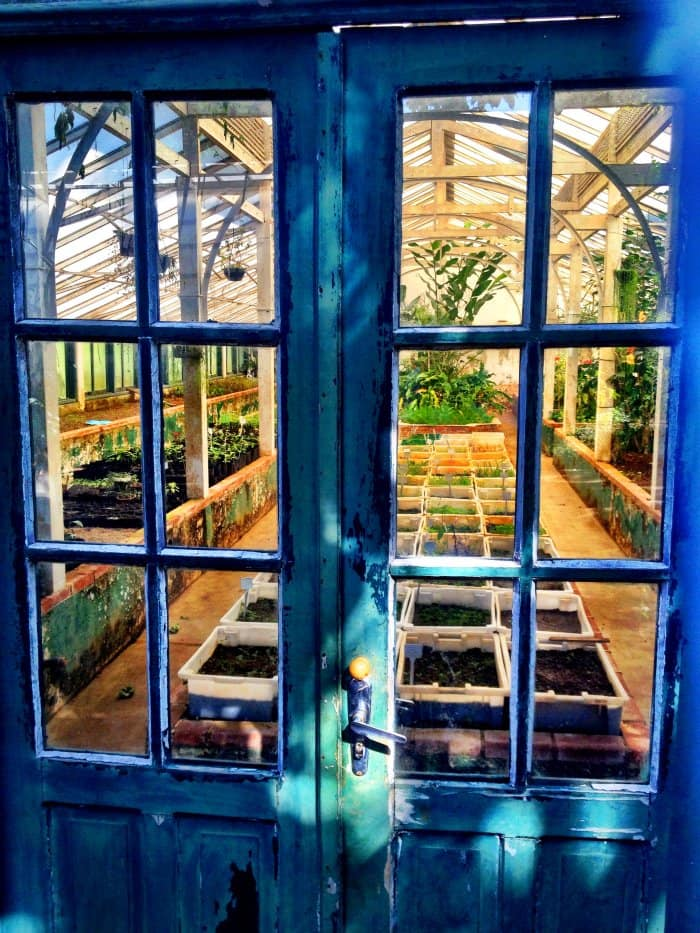 Blue doors are a great greenhouse focal point. (Photo courtesy of Getty Images/EyeEm)