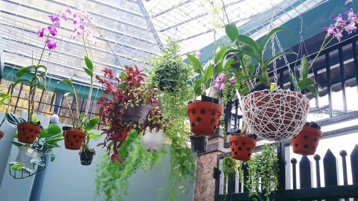 Hanging plants work perfectly in greenhouses. (Photo courtesy of Getty Images/EyeEm)