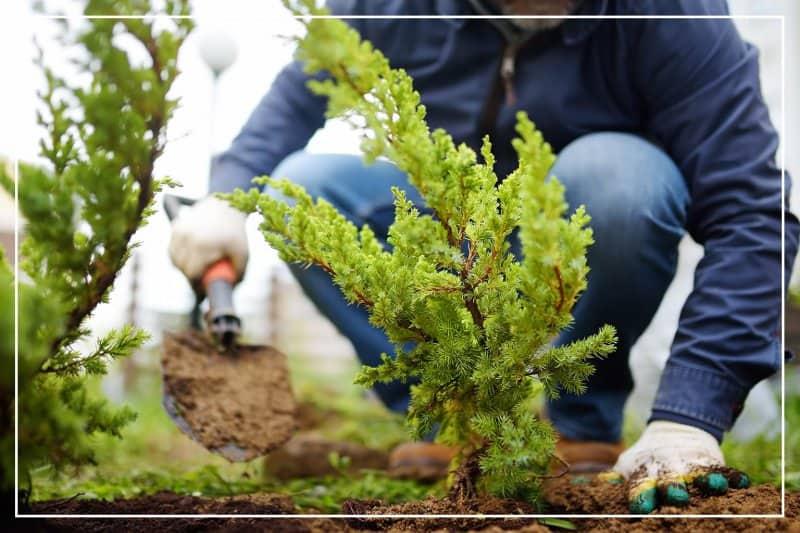Man planting shrub bush close up (Photo by SbytovaMN / iStock / Getty Images Plus via Getty Images)