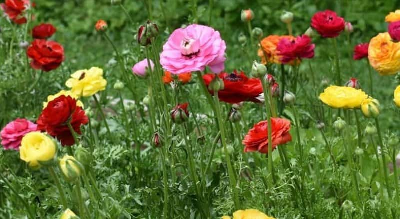 Close-up of pink, red, and yellow flowers in the grass of farmland