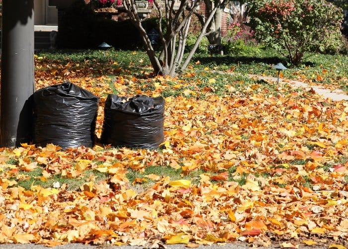 Lawn with bags of leaves and scattered fallen autumn leaves