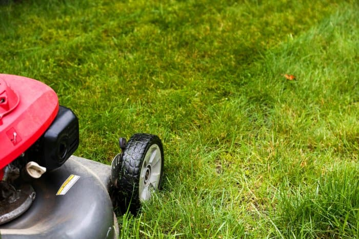 Mowing a lawn too short can damage a healthy lawn. (Photo courtesy of Melissa Caughey/Tilly's Nest)
