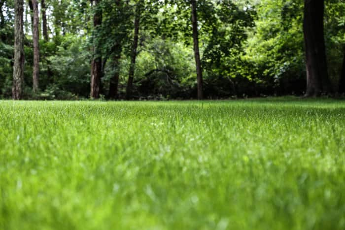 A healthy lawn will improve the look of your landscaping. (Photo courtesy of Melissa Caughey/Tilly's Nest)