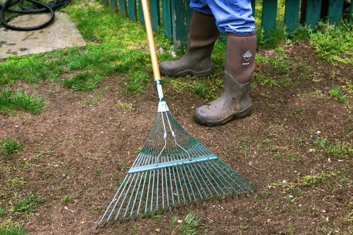 Rake out any dead grass, stones, sticks and weeds before reseeding. (Photo courtesy of Melissa Caughey/Tilly's Nest)