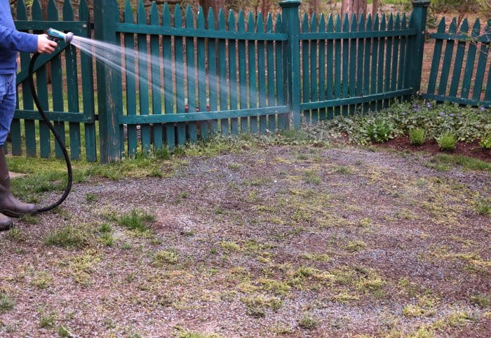 Water your new grass regularly to keep it growing nicely. (Photo courtesy of Melissa Caughey/Tilly's Nest)
