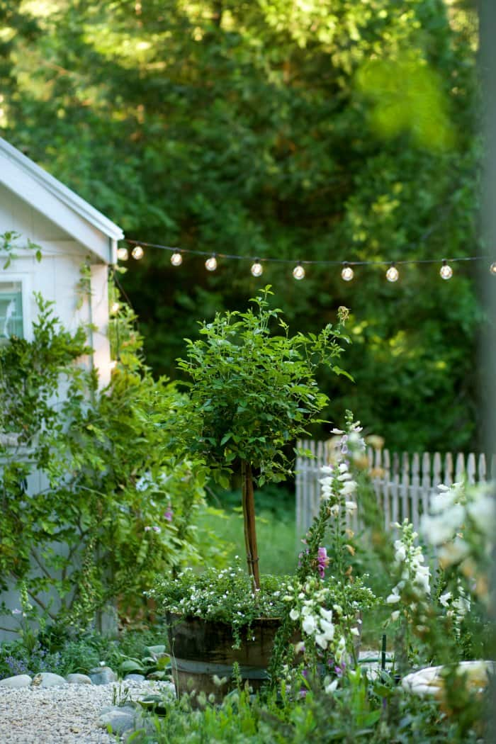 Whiskey barrel planters were perfect for the landscape. (Photo courtesy of Courtney Allison/The French Country Cottage)